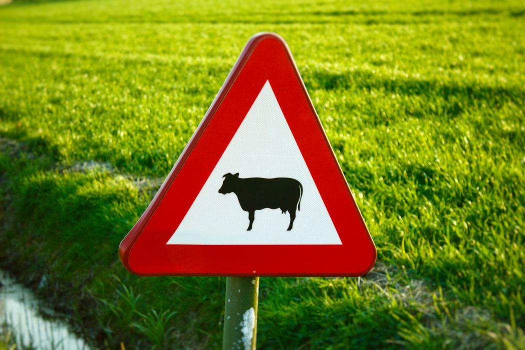 wegenizm i wegetarianizm